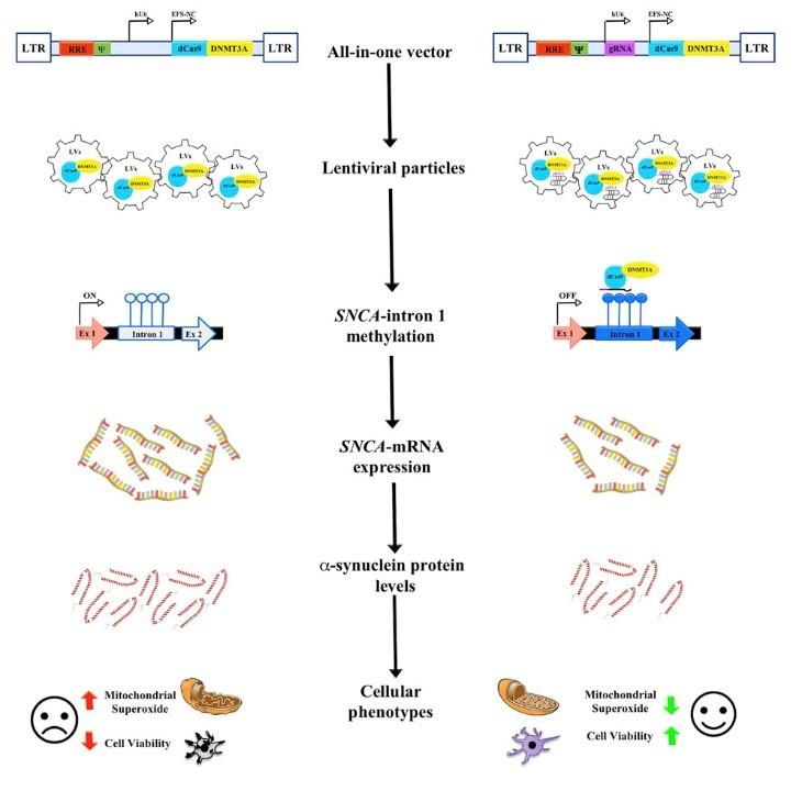 SLS-004: Targeted Epigenome-Editing
